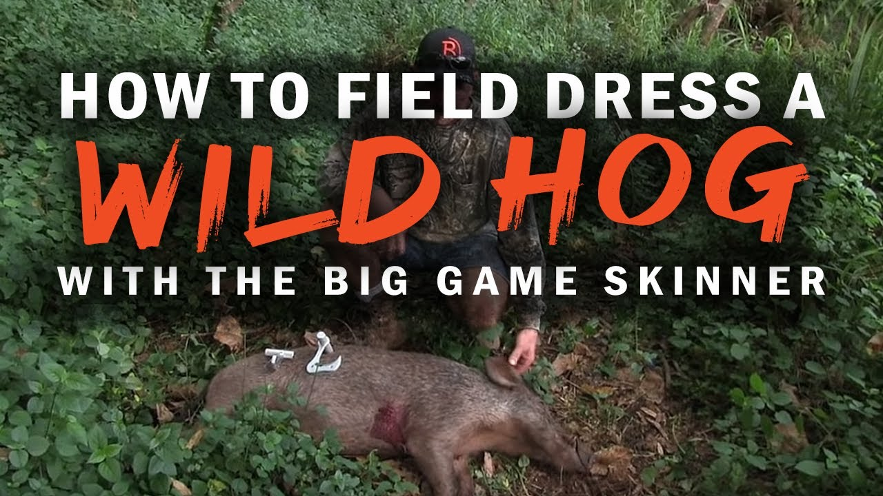 How to field dress a wild hog with the BIG Game Skinner | Raptorazor