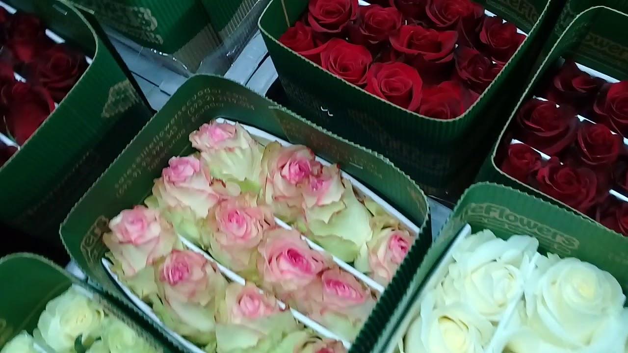 Как закупать цветы оптом с аукционов Голландии и плантаций .