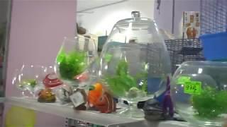 круглые аквариумы и искусственные растения