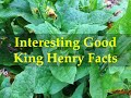 Interesting Good King Henry Facts