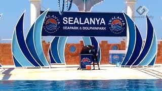 Best parts of Sealanya Dolphin Show   Turkey 2018