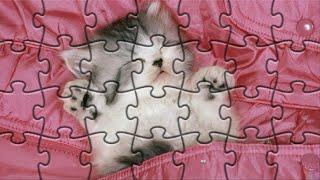Котики картинки - Собираем детские пазлы про котиков