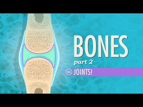 Joints: Crash Course A&P #20 - YouTube