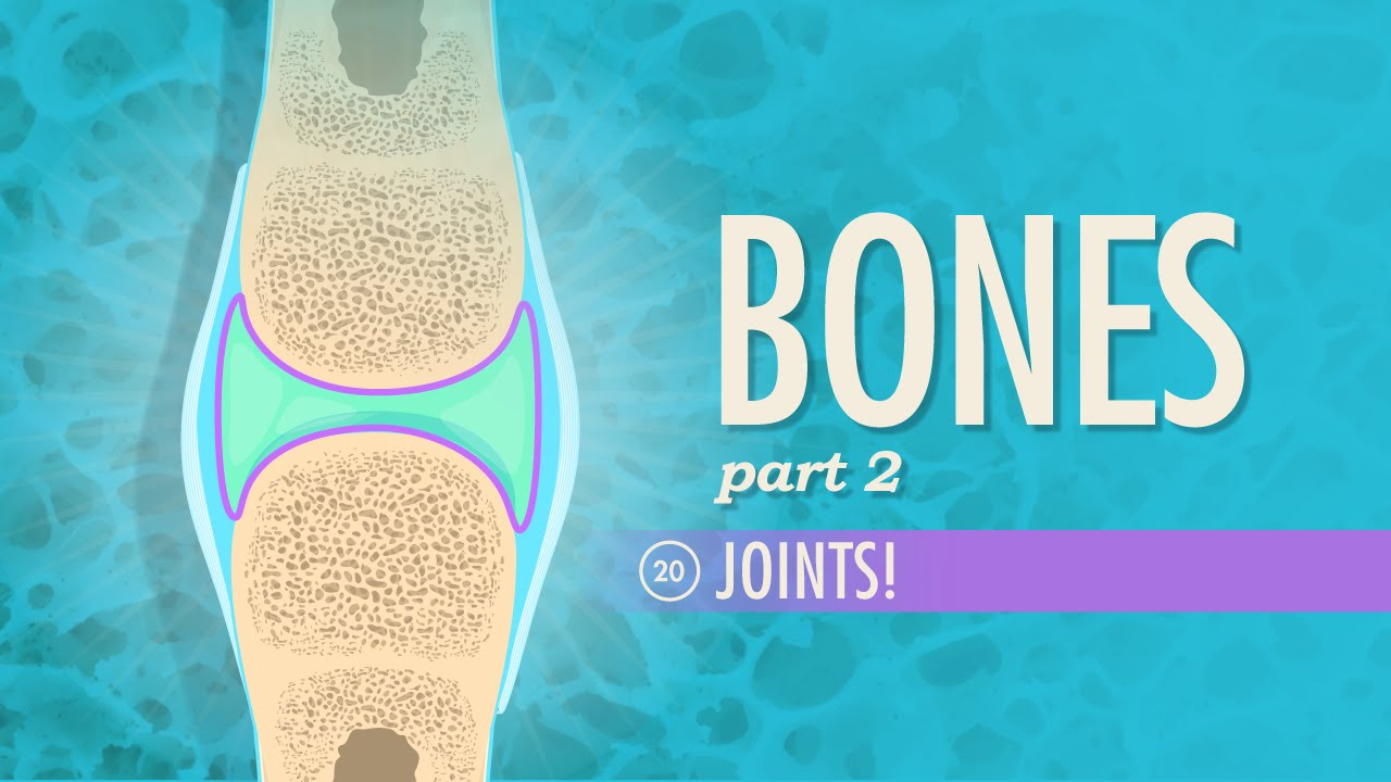 Joints: Crash Course A&P #20 - YouTube