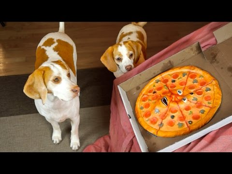 How To Teach Your Dog Not To Steal Pizza