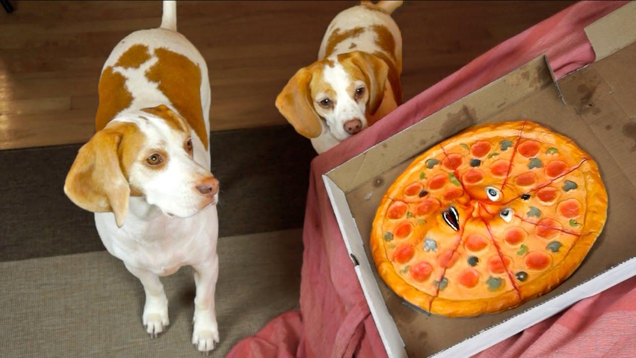 Dogs vs. Talking Pizza Prank Funny Dogs Maymo & Penny