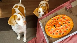 Dogs vs. Talking Pizza Prank: Funny Dogs Maymo & Penny