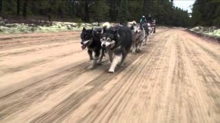 Nordiclight Alaskan Malamutes, fall training