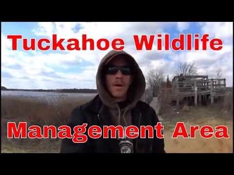 Tuckahoe Wildlife Management Area NJ.