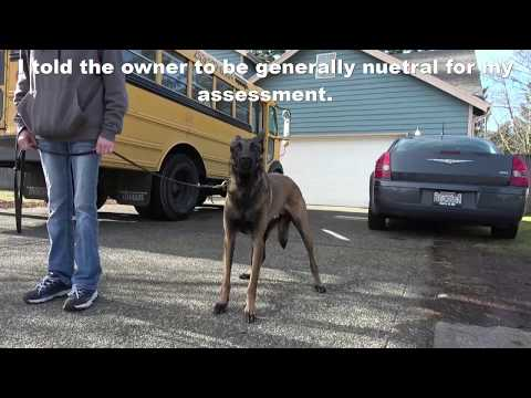 Dog Control; Chris Castro; Nation, Aggressive Malinois, First 2 Days of Training