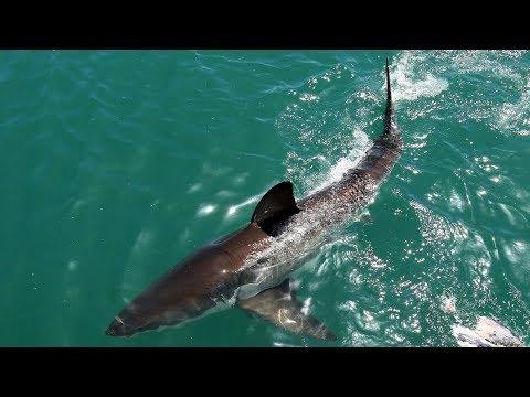 В Австралии акула убила туриста