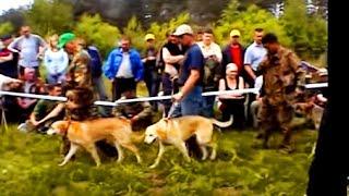 10-ая Всероссийская выставка охотничьих собак г.Тверь-2007г. 1- часть.