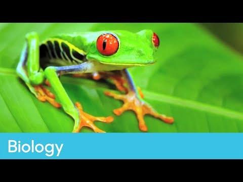 Amphibians For KS1 And KS2 Children Amphibians Homework