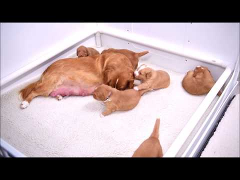 Patty's Puppies Present: Play Time