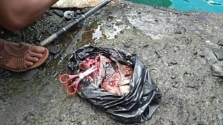 4.[Extreme Fishing]Mancing Spot @Mbandol,Sadeng:Mancing pinggiran dermaga strike Pethek&Ikan Kuniran Mp3