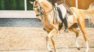 ~Equestrian Sport~Lordly~Конный спорт~