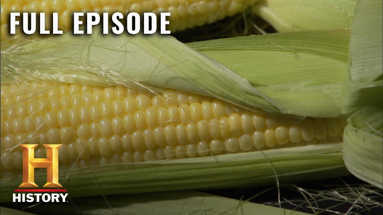 Download Modern Marvels: How Corn Fuels America (S13, E39) | Full Episode | History
