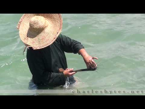 How To Catch and Kill A Sea Urchin (Pt 1)
