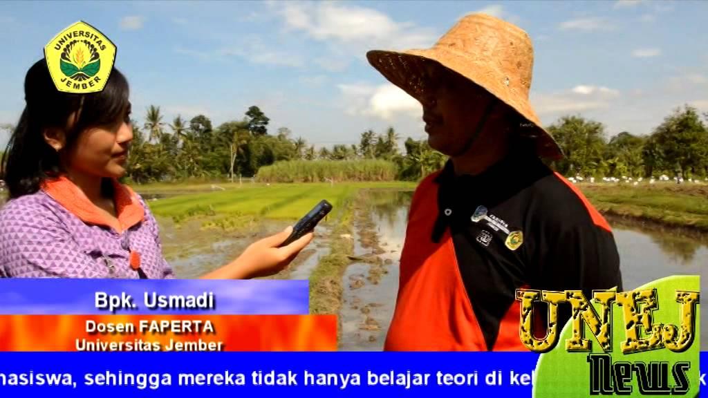Kuliah Lapang Fakultas Pertanian Youtube