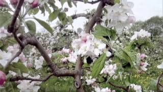 Cherry Pink & Apple Blossom White   Montaż   Piotr Janczewski