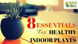 8 Essentials For Healthy Indoor Plants