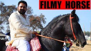 फिल्मों में दिखने वाला घोडा   Film Star Marwari Horse   Horse of Dulla Vaily