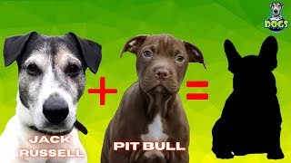 Top 10  Jack Russell Mix Breeds
