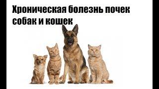 Хроническая болезнь почек собак и кошек. Ключевые аспекты.