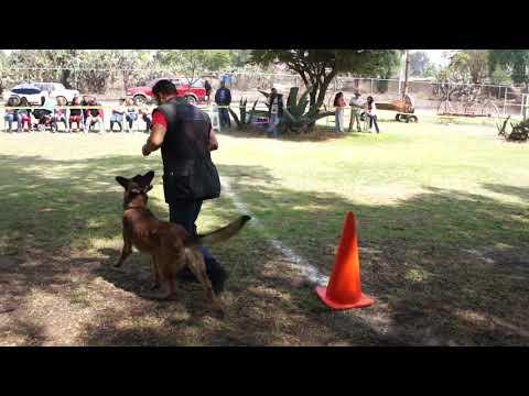 Competencia de perro