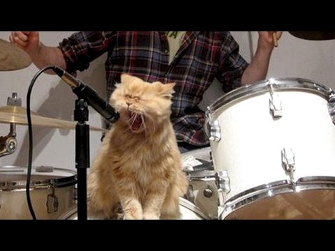 Cats & dogs singing with their owners – Funny and cute animal compilation