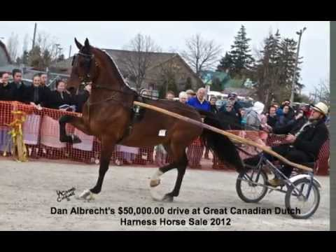 Dutch Harness Horse Mare sells for $50,000