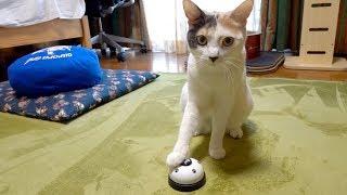 呼び鈴を鳴らしてご飯をおねだりする猫ぽてと