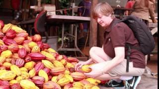 Auf Hawaii wächst tatsächlich Kakao.