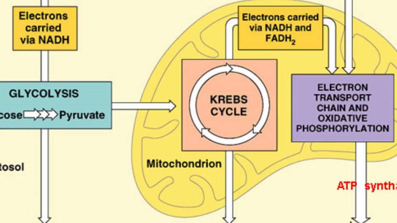 Journey Diagram Carbon Atoms Data Schema Oxygen Atom Montessori Muddle S Youtube Model