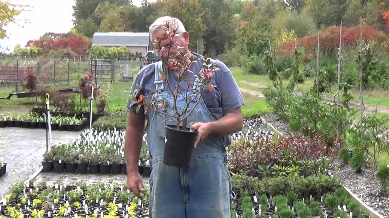 plant sizes and value youtube