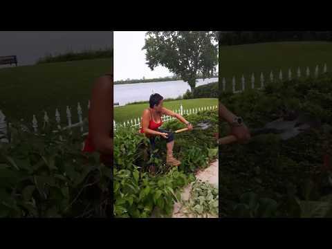 Landscaping adventures | Montreal Quebec | Women kickin grass!!!