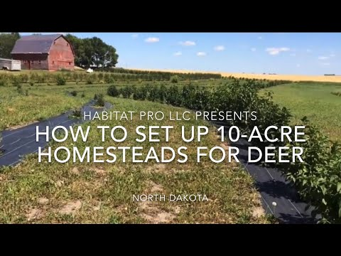 How To Set Up 10-Acre Homesteads For Deer Hunting