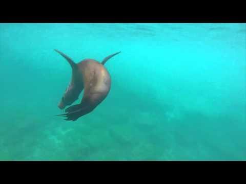 Incredible playful Galápagos sea lion encounter on San Cristóbal Island - Inspiredbymaps.com