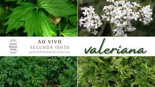 VALERIANA - Conversando sobre plantas medicinais com Marcos Guião