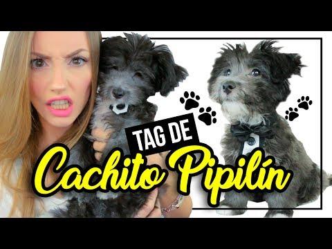¡TAG DE LA MASCOTA CON CACHITO! ♥ Katie Angel