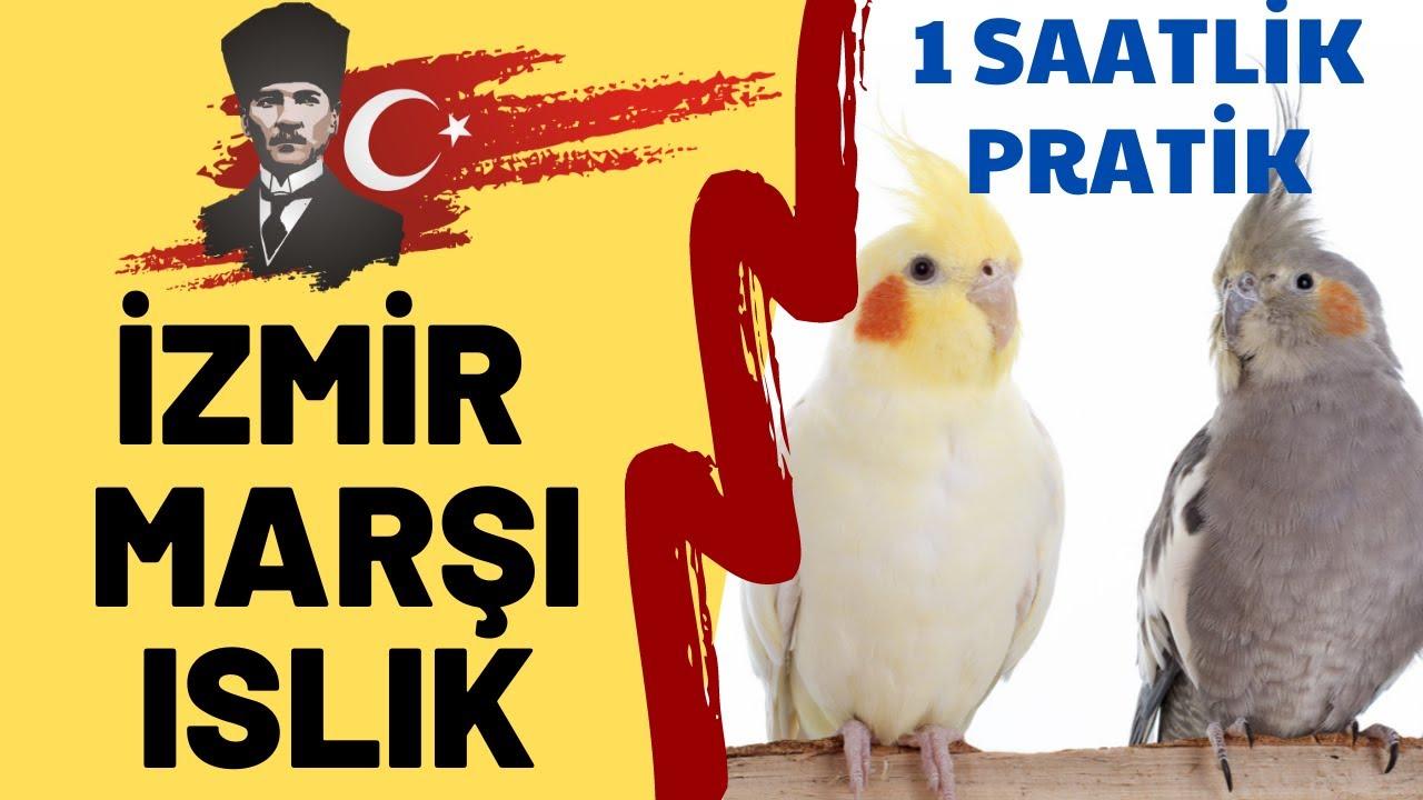 ISLIKLA İZMİR MARŞI 1 SAAT - ISLIKLA PAPAĞAN ŞARKILARI - SULTAN PAPAĞANI İZMİR MARŞI