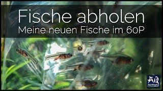 ICH HOLE MEINE FISCHE AB 🐠 | Besatz für mein 60P Aquarium | AquaOwner VLOG