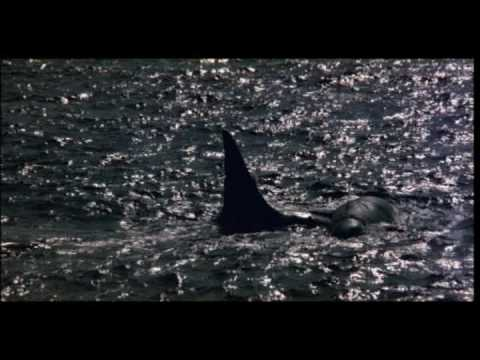 STOP ANIMAL CRUELTY ! Orca The Killer Whale SAD MOVIE