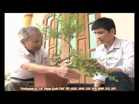 Vietbonsai.vn: Kỹ thuật tạo kiểu cành cây cảnh - P3