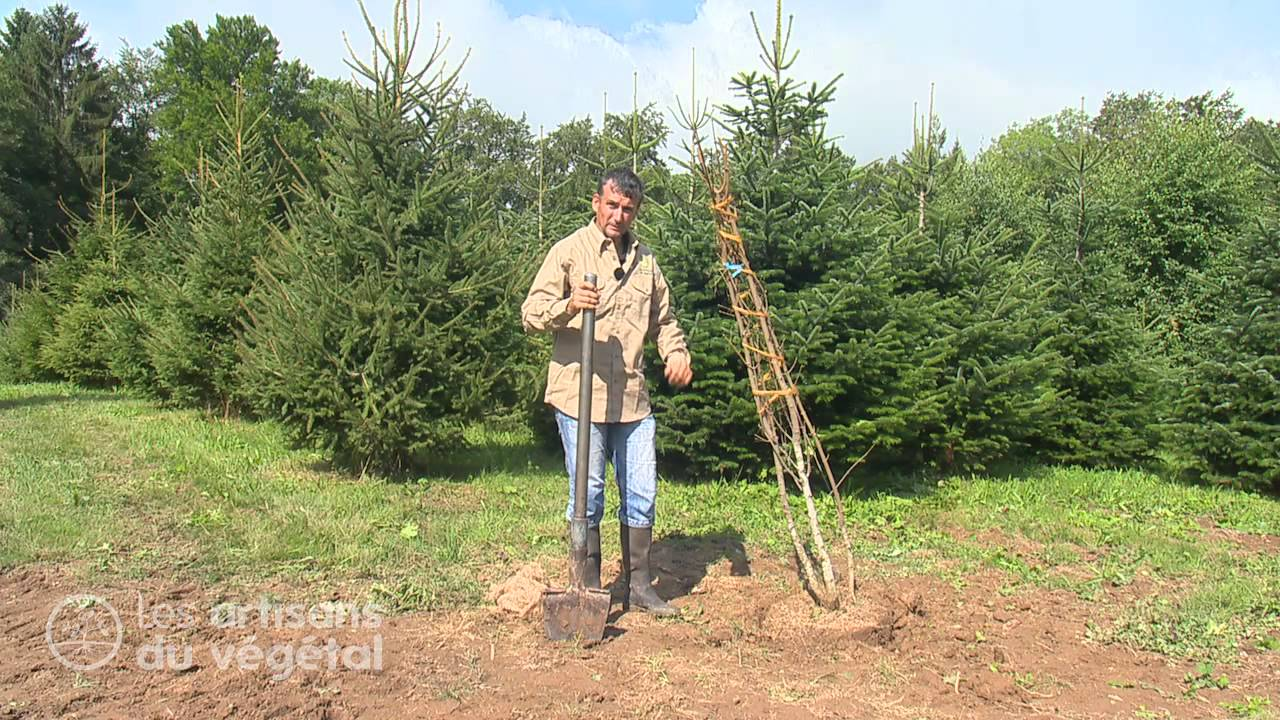 Comment d placer un arbre youtube - Comment entretenir un olivier arbre ...
