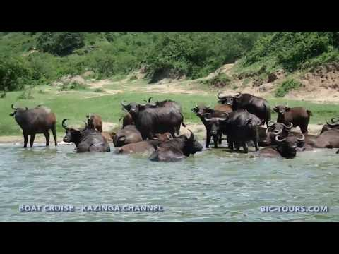Discovering Uganda in 15 Days with at Japanese Travel Guide Book Editor