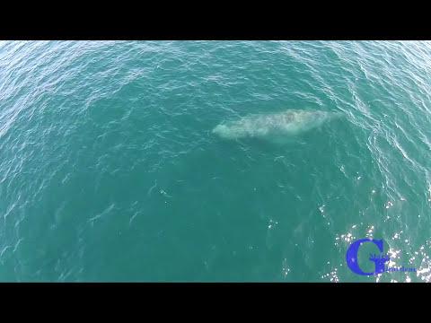 Mira desde un drone los arcoiris que forman las ballenas con sus exhalaciones