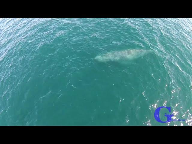 Magical Humpback Whale shoots rainbow
