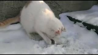 Кот ловит мышей!