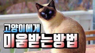 [ENG SUB] 왜 집사들은 고양이에게 맞고 살까?